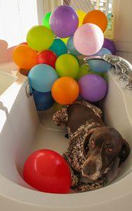 A balloon a day, dag 45